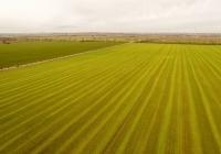 Landwirtschaft in Schafstädt